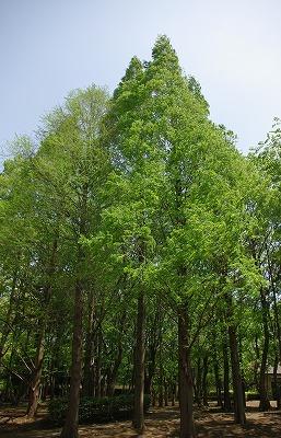 森林_d0147812_13534554.jpg