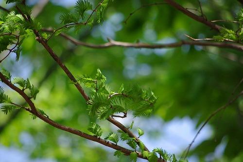 森林_d0147812_13541754.jpg