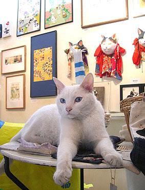 『猫ふんじゃったなギャラリーたち 』は終了しました。_f0138928_1201698.jpg