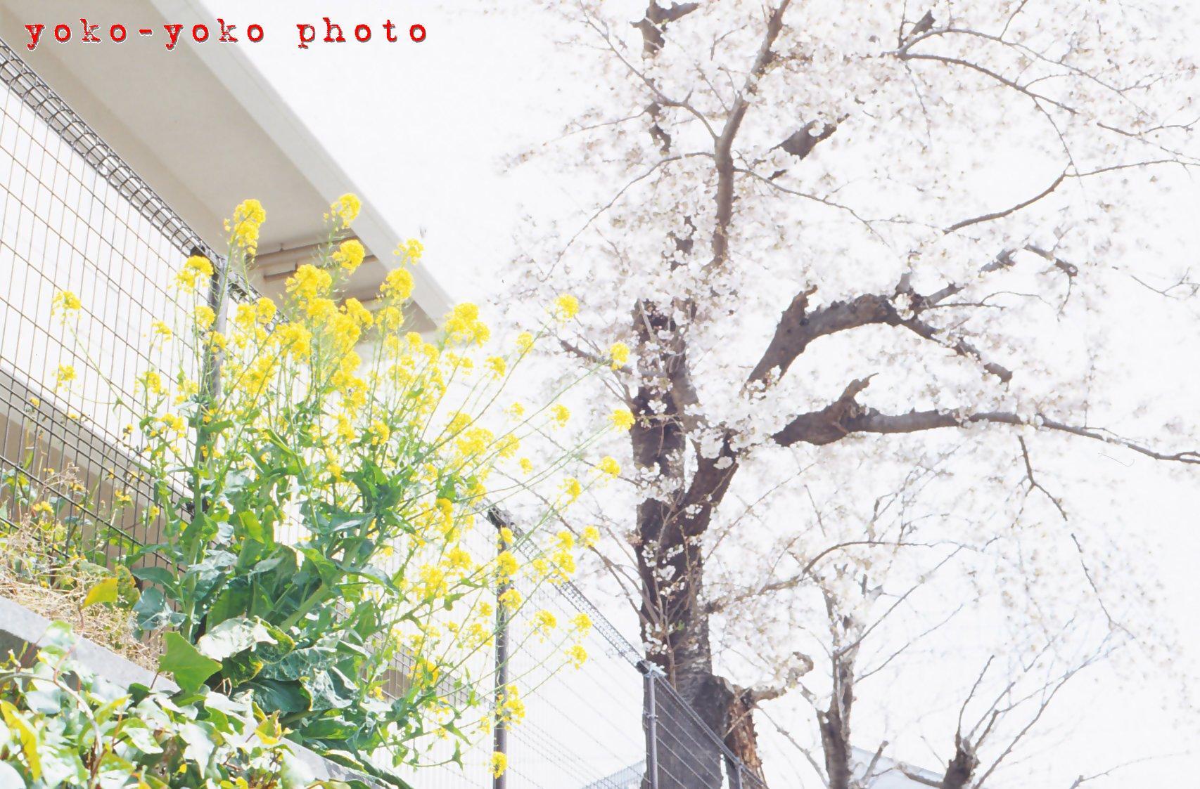 b0149130_1985341.jpg