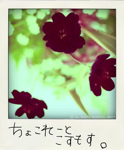 f0130030_2225237.jpg