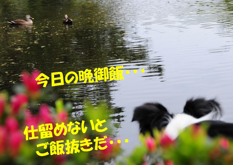 c0147241_21194732.jpg