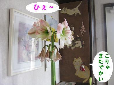 b0151748_15583522.jpg