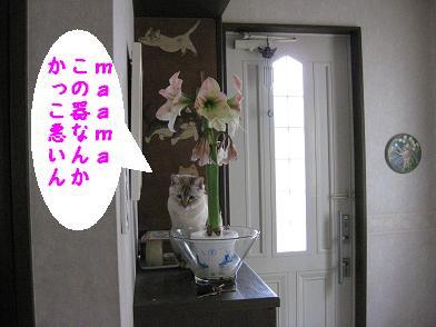 b0151748_1601439.jpg