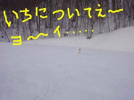 c0105157_19561435.jpg