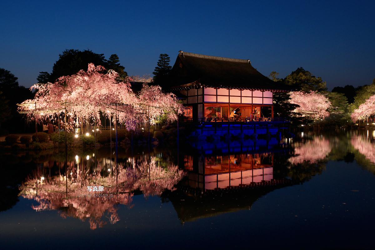 平安神宮 夜桜 2_f0021869_2252054.jpg