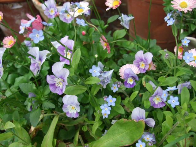 オークリーフ(オールドブランシュ咲きました。)_f0049672_10482010.jpg