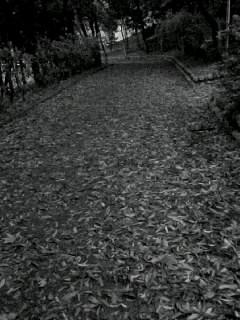 f0100480_194695.jpg