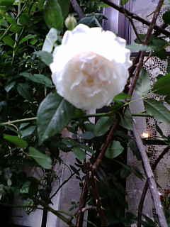 高嶺の花☆_a0059281_16201158.jpg
