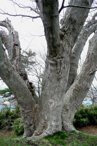能代公園の木々_f0150893_12483118.jpg