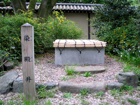 京都御苑 ヤマブキなど_e0048413_238627.jpg