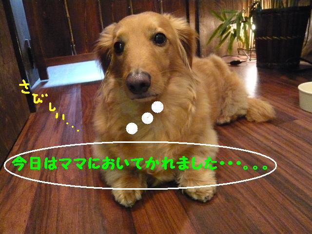 b0130018_20115438.jpg