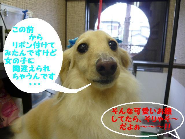 b0130018_2084919.jpg