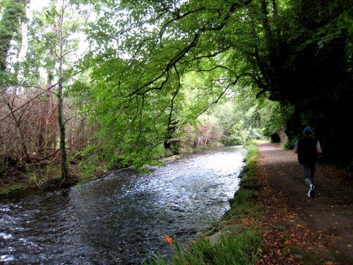 アイルランド編(37):キラーニー国立公園(08.8)_c0051620_6114996.jpg