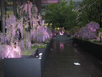 Japan Flower Festibal 2009_c0165824_22231056.jpg