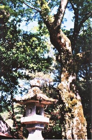 新緑の三宮神社_e0156251_6244498.jpg