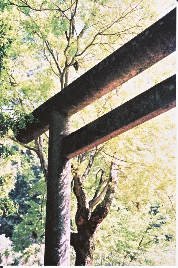 新緑の三宮神社_e0156251_6255615.jpg