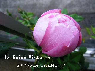 c0178855_1647156.jpg
