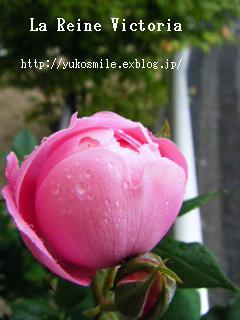 c0178855_1647187.jpg