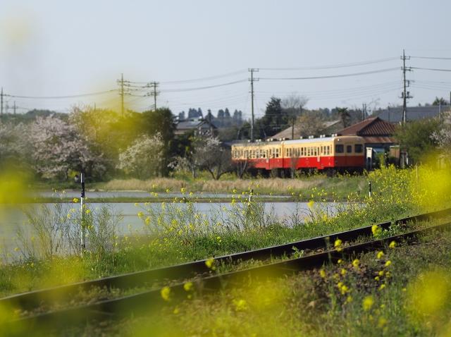 小湊線に春が来た_f0018464_6421825.jpg