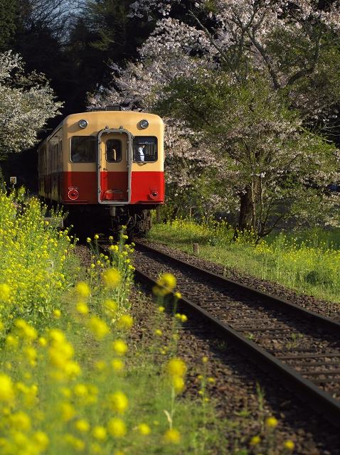 小湊線に春が来た_f0018464_6423010.jpg