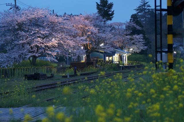 小湊線に春が来た_f0018464_6424799.jpg