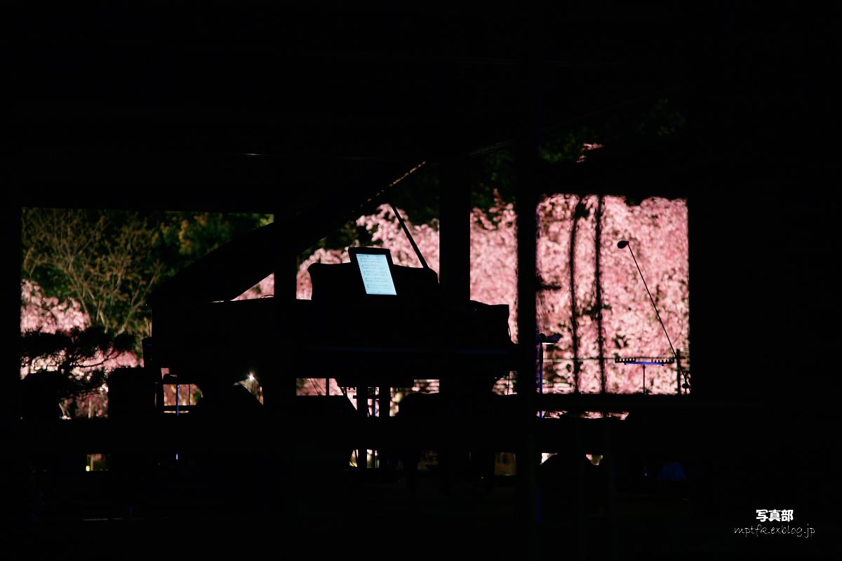 平安神宮 夜桜 3_f0021869_22562014.jpg