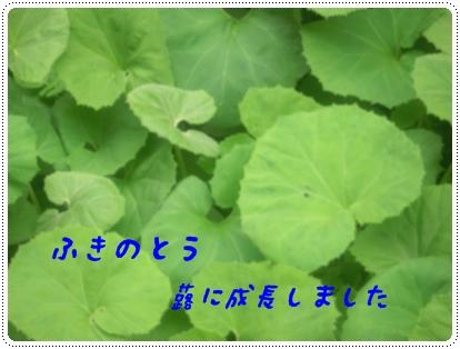 b0149071_21332480.jpg