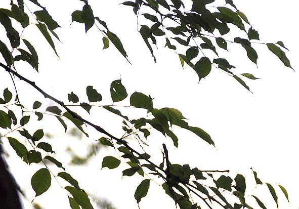 f0198771_181329.jpg