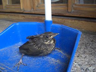 小鳥の心臓を持つ男_f0095873_16541444.jpg