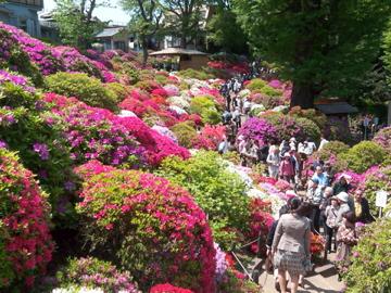 根津神社のツツジ/上野東照宮の牡丹_c0180686_12542477.jpg