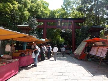 根津神社のツツジ/上野東照宮の牡丹_c0180686_1503870.jpg