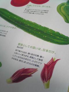 野菜ヤサイ831_d0119487_9303386.jpg