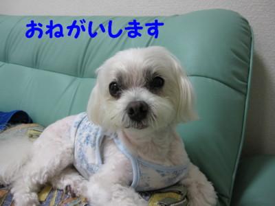 f0145192_15445324.jpg