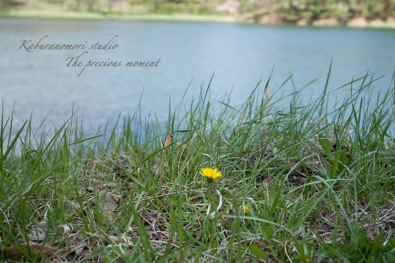 09/4/28          新緑のみどり湖畔_c0137403_17473736.jpg