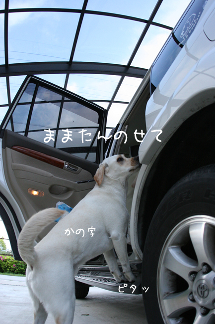 c0089005_053695.jpg