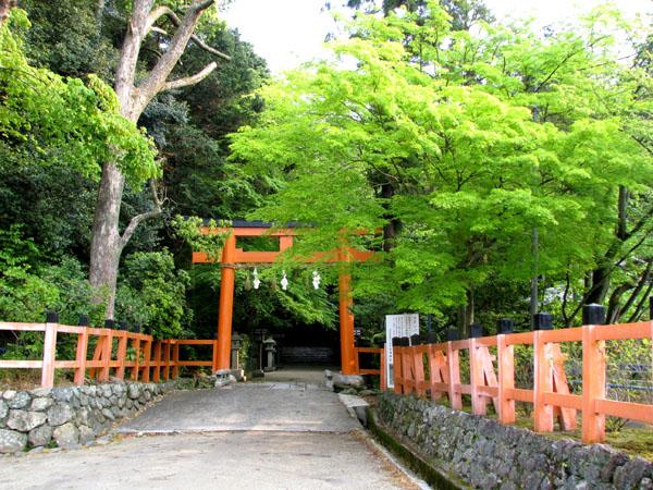 太田神社 カキツバタ_e0048413_22494179.jpg