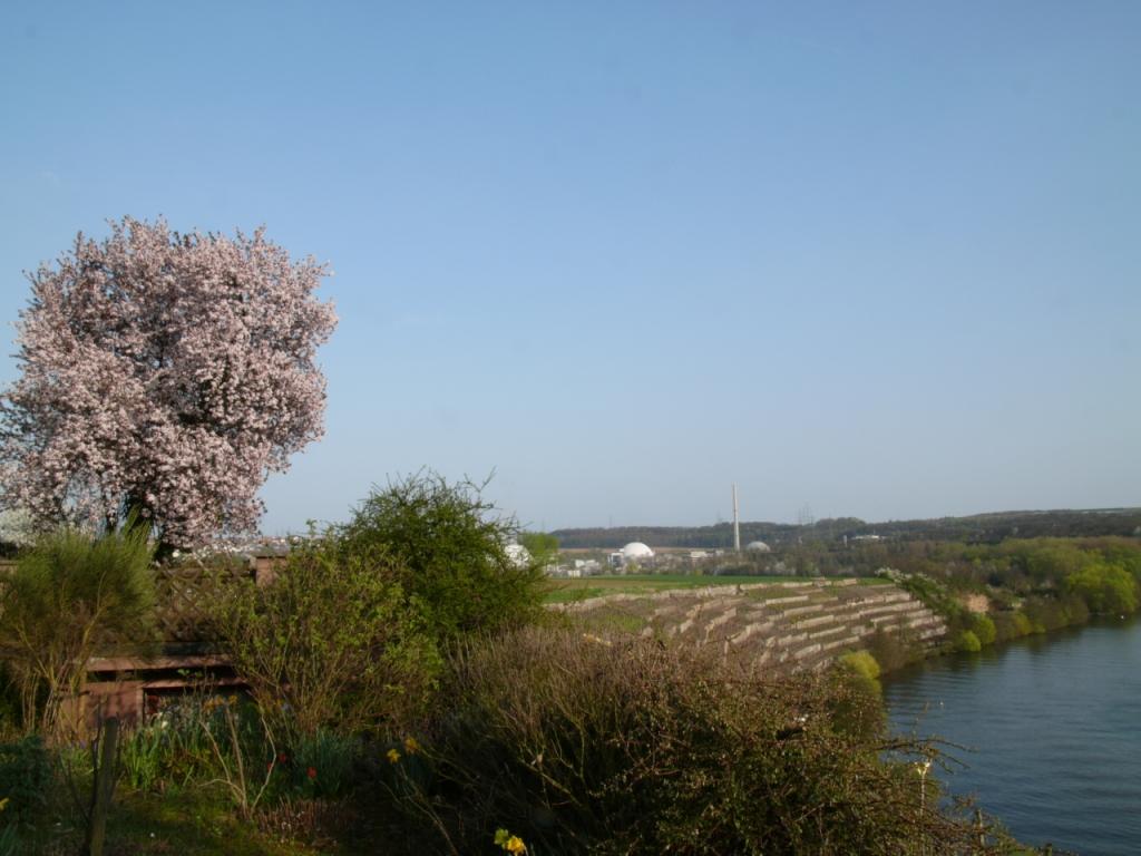川のほとりに_b0148617_721894.jpg