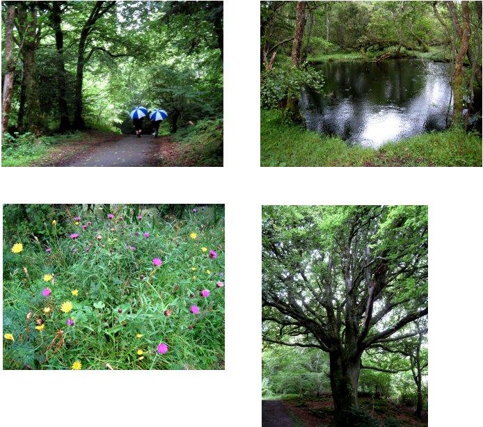 アイルランド編(38):キラーニー国立公園(08.8)_c0051620_6525031.jpg