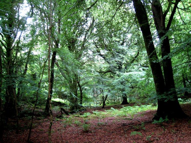 アイルランド編(38):キラーニー国立公園(08.8)_c0051620_6554670.jpg