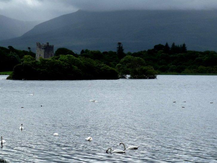 アイルランド編(38):キラーニー国立公園(08.8)_c0051620_655676.jpg