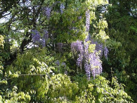 オーダー作品☆紫小花の布財布♪_f0023333_204572.jpg