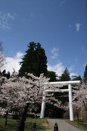 土津神社の桜_f0048546_63624.jpg