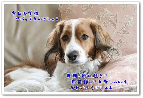 d0013149_8465466.jpg