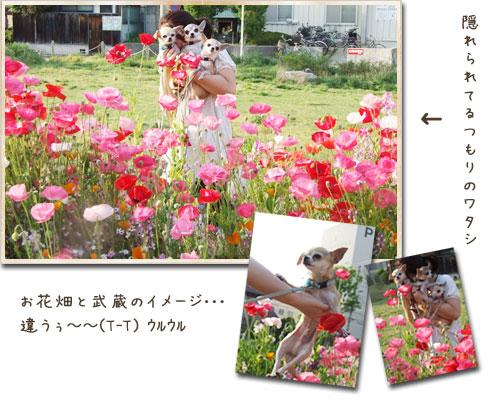 c0019050_46468.jpg