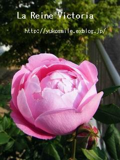c0178855_165094.jpg