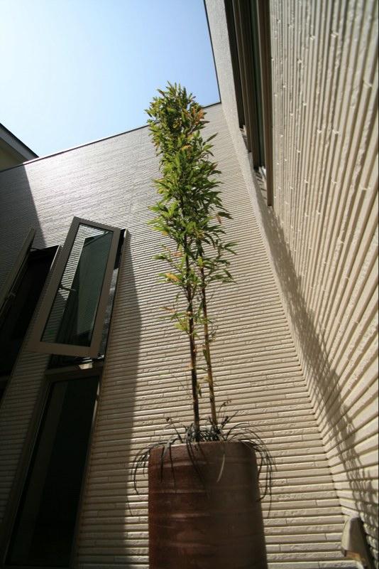 涼しげな植物_f0198764_17421091.jpg