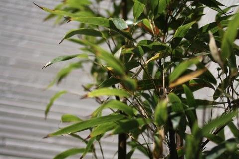 涼しげな植物_f0198764_17423329.jpg