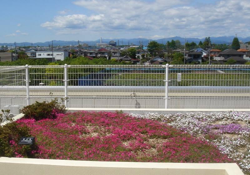屋上の芝桜_f0059673_8492446.jpg
