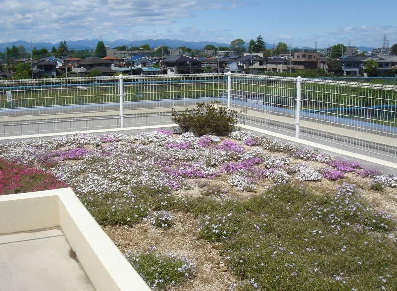 屋上の芝桜_f0059673_8493861.jpg